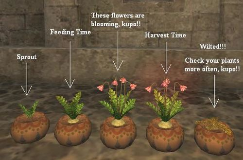 Gardening Gamer Escape Gaming News Reviews Wikis And